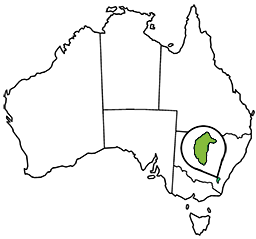 Map of Australia highlighting the ACT